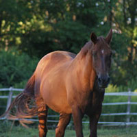 The Bucks County Horse Park, part of the Bucks County Park System, is a unique facility dedicated to the preservation of natural environment for amateur equestrian pursuits. Located in Revere, Pennsylvania, we provide a variety of competitions and trail riding for all ages and disciplines of riding.