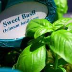 Tips for an Herb Garden