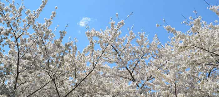 Spring is a wonderful time to enjoy shopping, dining, and the wonderful sights in Morrisville, Bucks County PA